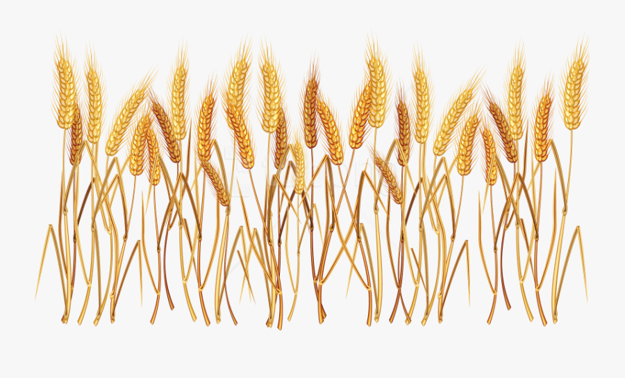 Free Png Wheat Png Images Transparent - Wheat Clipart Transparent Background, Transparent Clipart