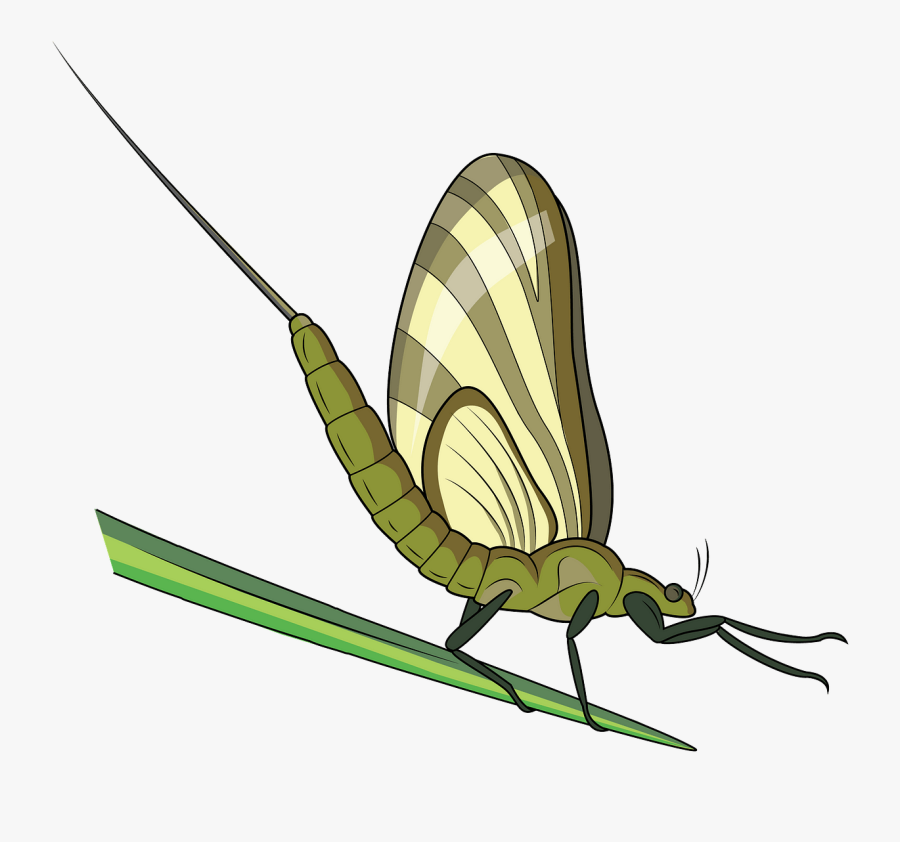 Butterfly, Transparent Clipart