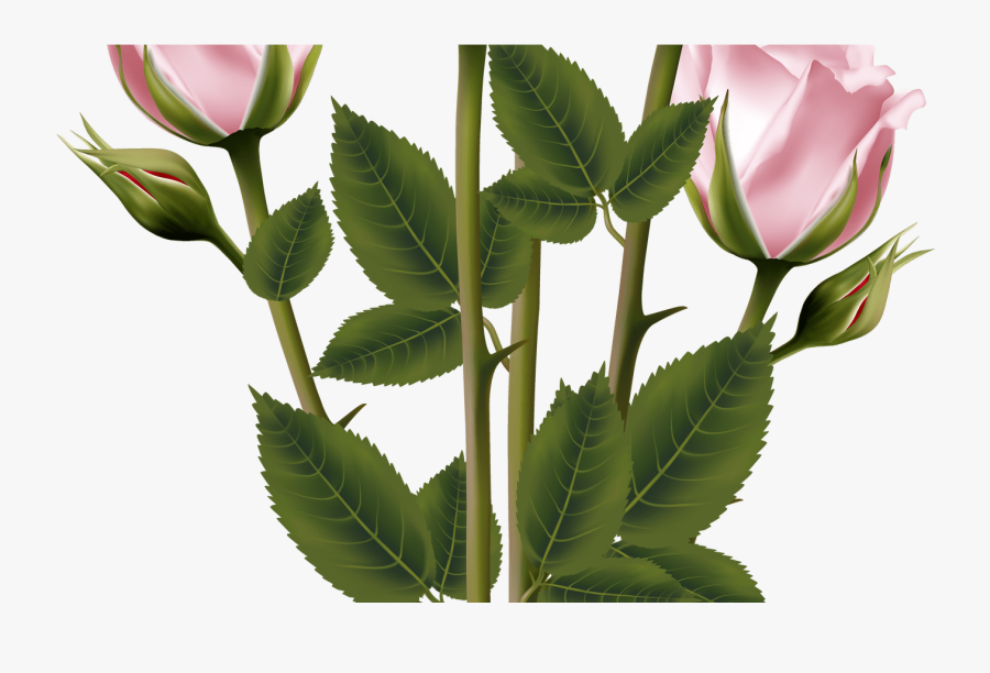 White And Pink Rose Bouquet Transparent Png Clip Art - Pink Rose Bouquet Illustration, Transparent Clipart