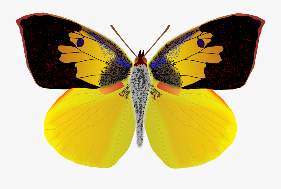 Dogface Butterfly - California State Dog Face Butterfly, Transparent Clipart