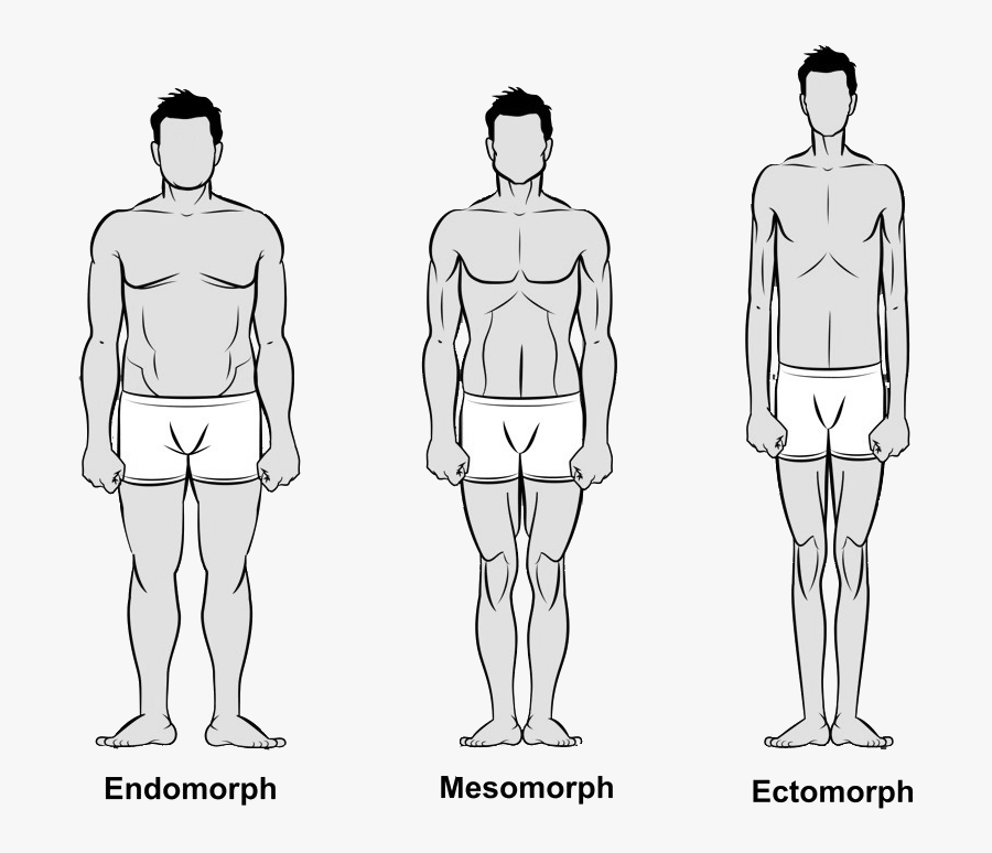 Clip Art What Is Your Body 3 Types Of Male Body Free Transparent Clipart Clipartkey