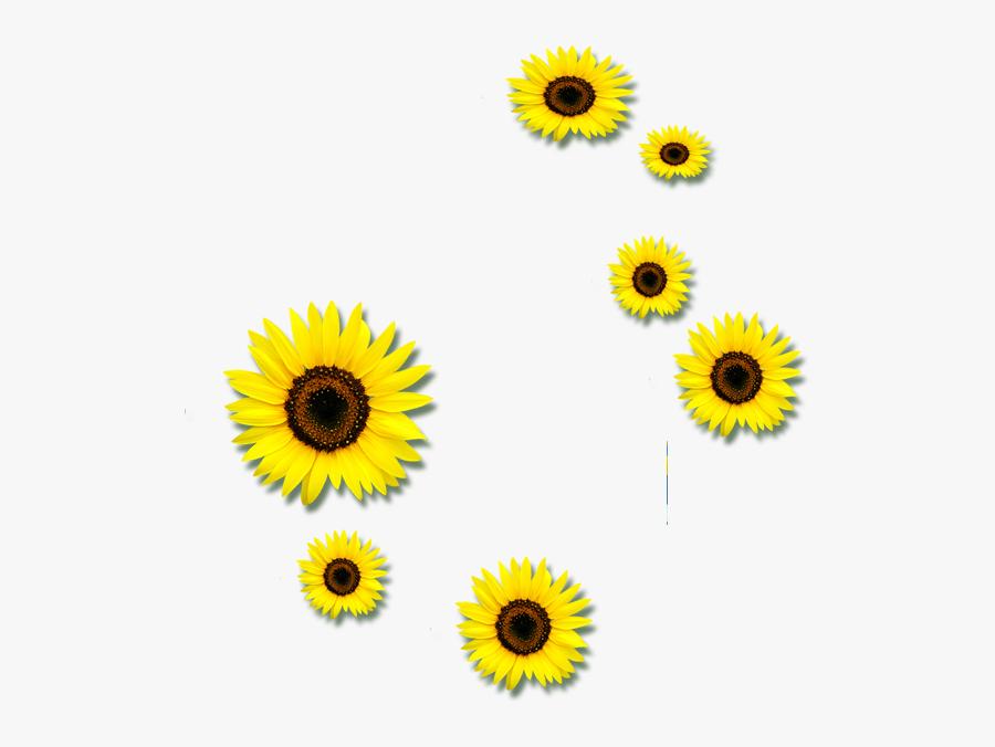 Common Sunflower Euclidean Vector Clip Art - Petals ...
