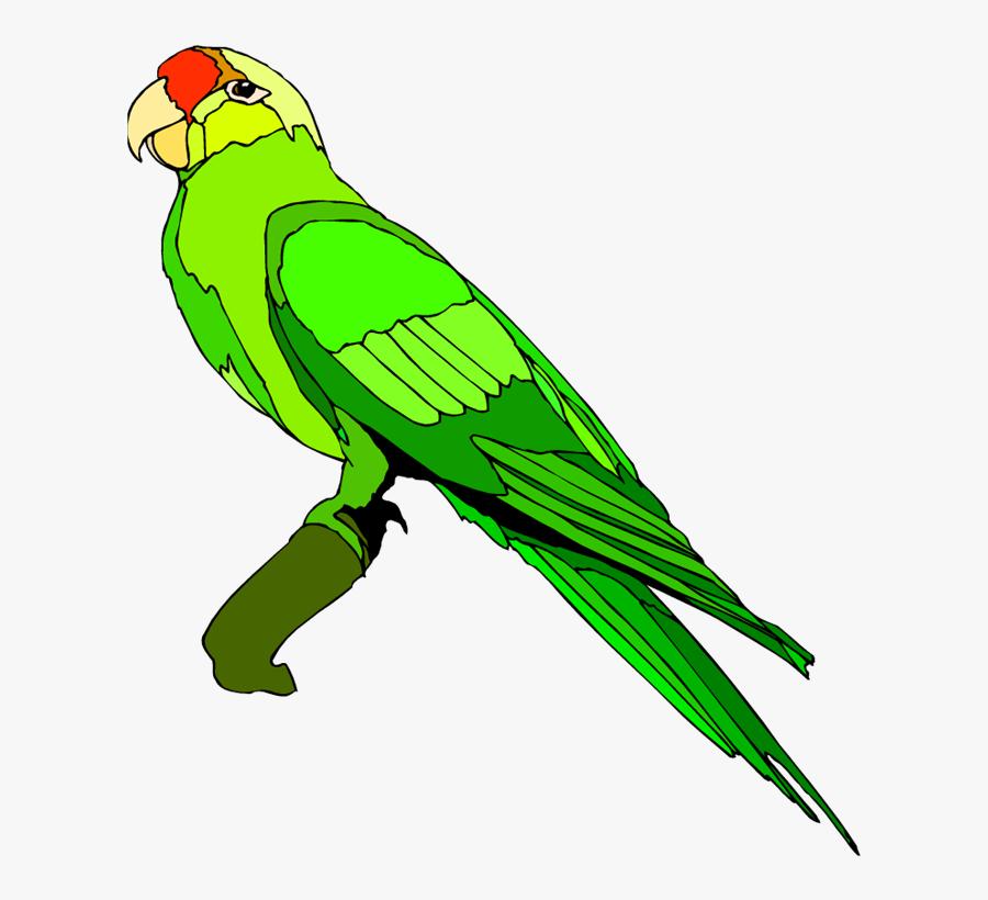 Clip Art Parrot - Green Parrot Clipart, Transparent Clipart