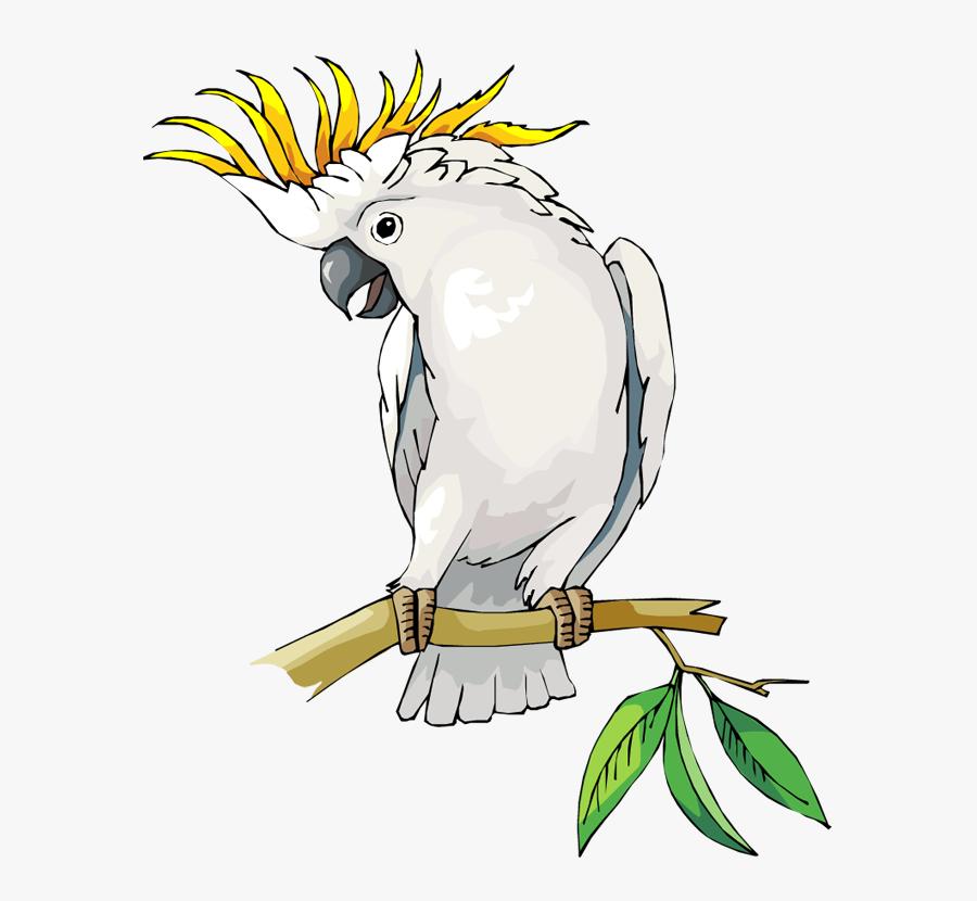 Cockatoo Bird Clip Art, Transparent Clipart