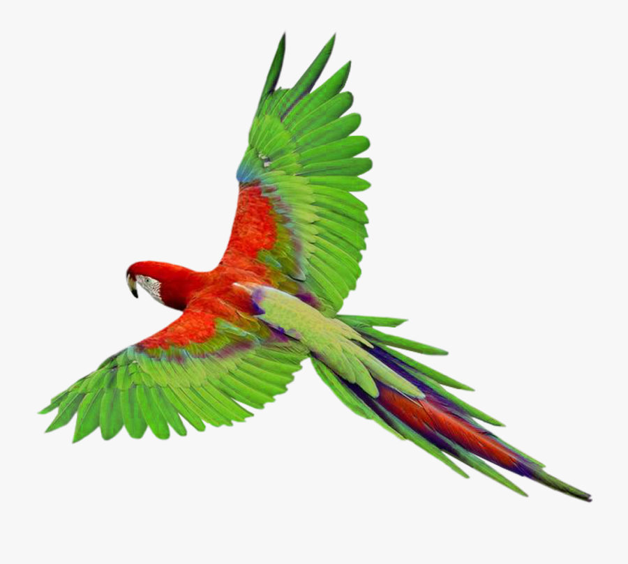 Flying Parrot Clipart - Bird Fly Png Transparent, Transparent Clipart