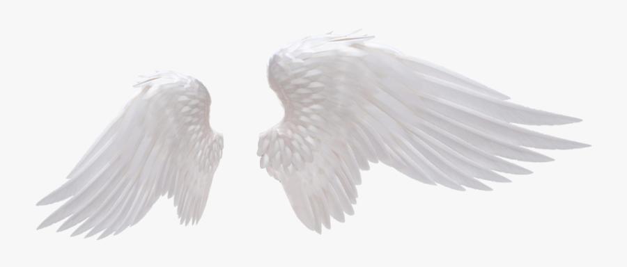 Angel Wing Png Images - Transparent Background Angel Wings Png, Transparent Clipart