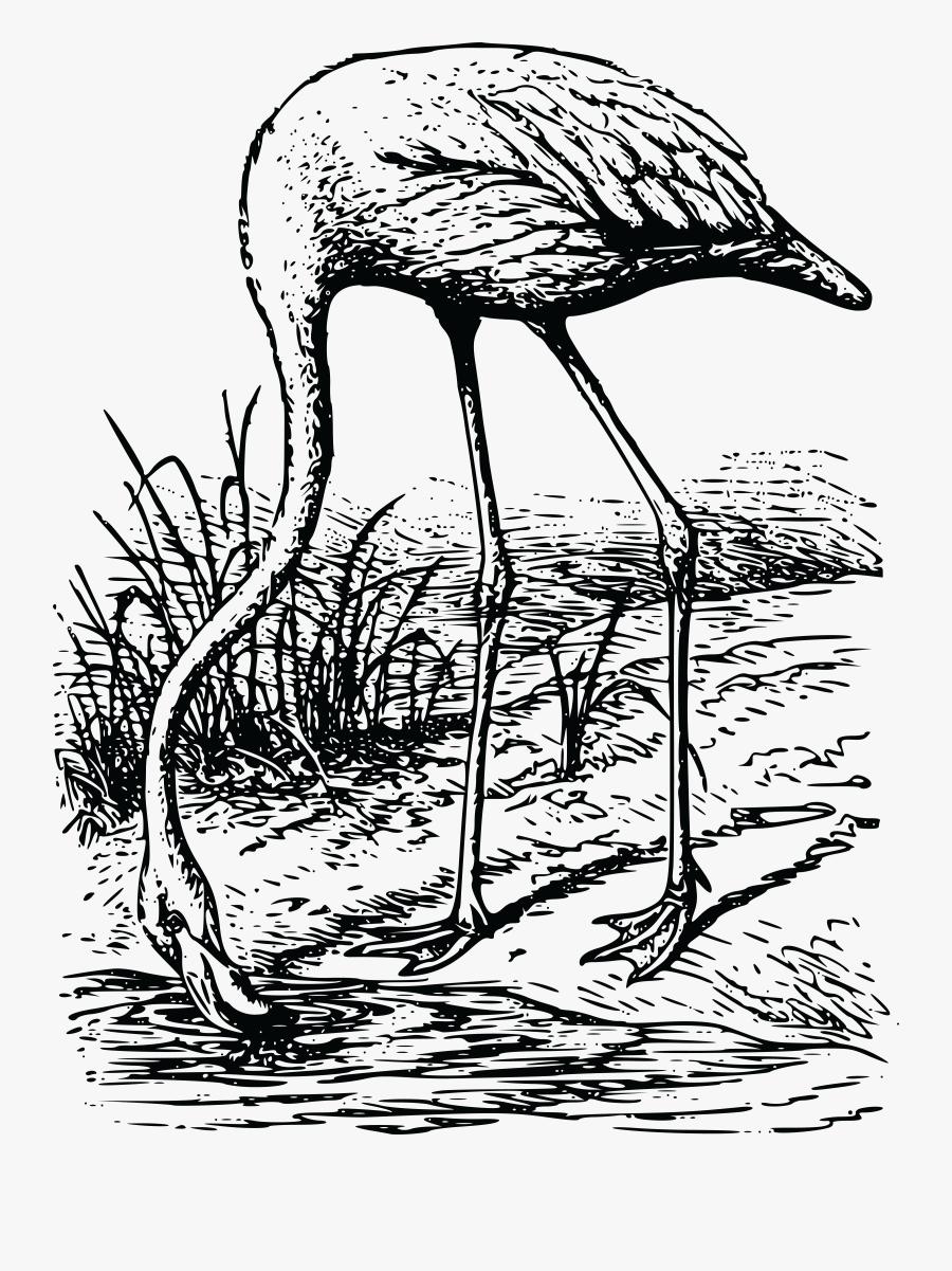 Flamingo, Transparent Clipart