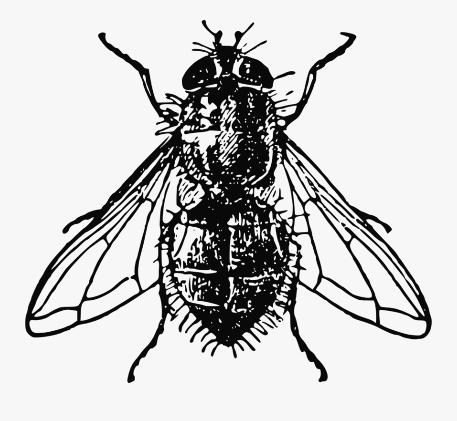 Thumb Image - Fly Black And White, Transparent Clipart