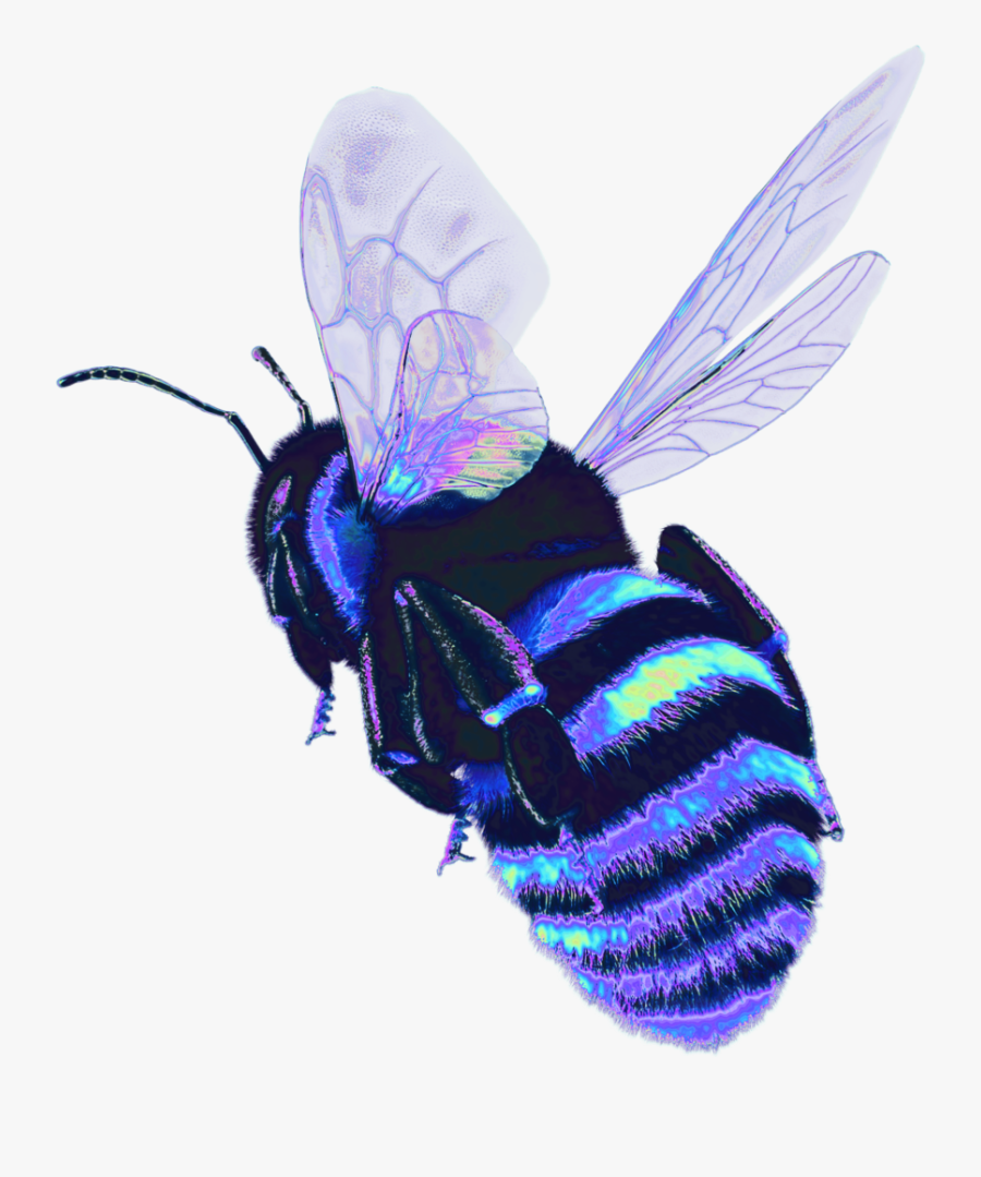 Bee Holo Holographic Bug Wings Fly Transparent - Bee Holographic, Transparent Clipart