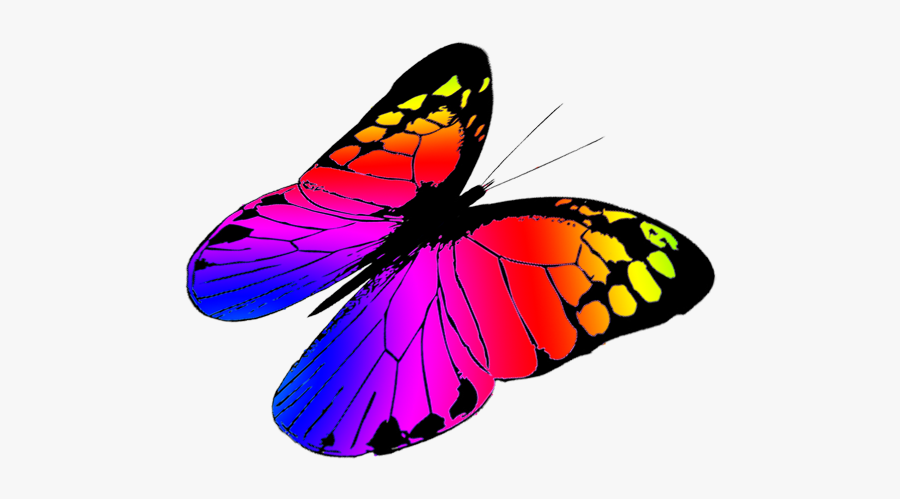 Free Butterfly Clipart - Colorful Butterflies Flying Png, Transparent Clipart
