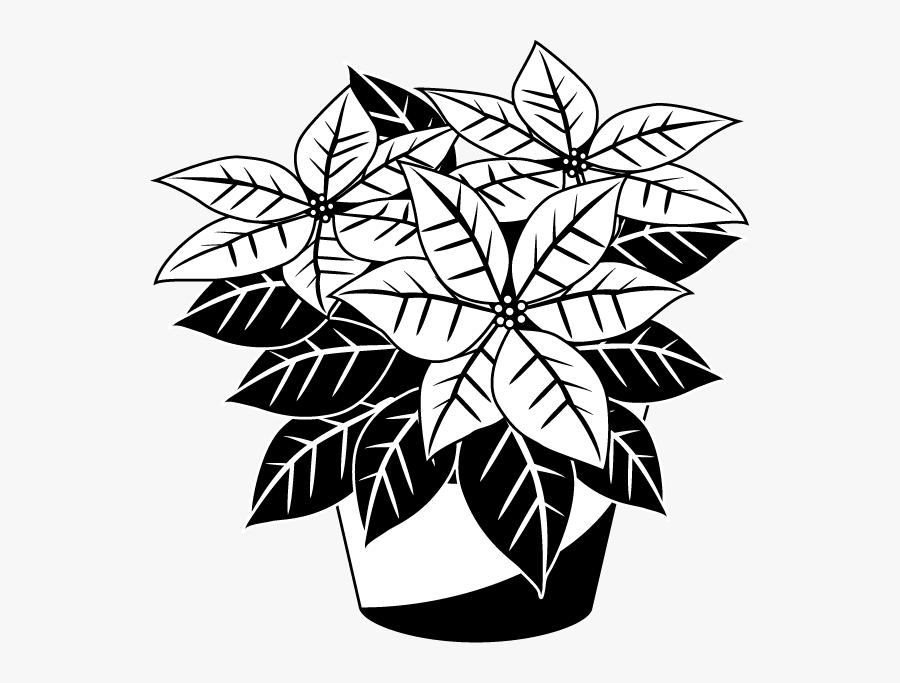 Transparent Poinsettia Clipart - Poinsettia Clip Art Free Black And White, Transparent Clipart
