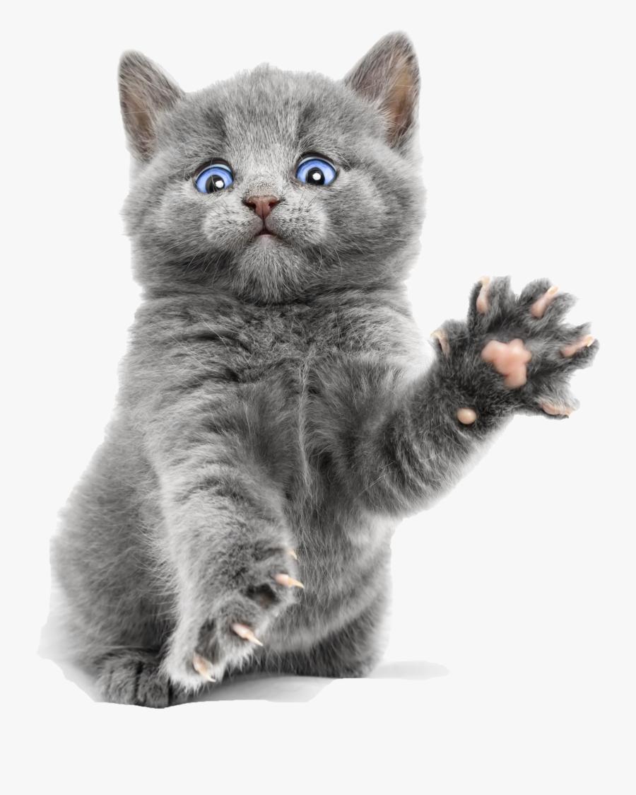 Blue Cute Kitty Ragdoll Bengal Burmese Kitten Clipart - Cute Blue Russian Cat, Transparent Clipart