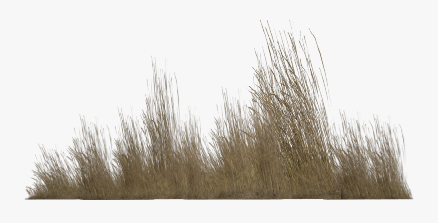 Reed Tall Grass Png Free Transparent Clipart Clipartkey