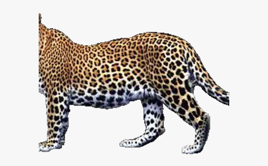 Transparent Leopard Png - Transparent Leopard, Transparent Clipart