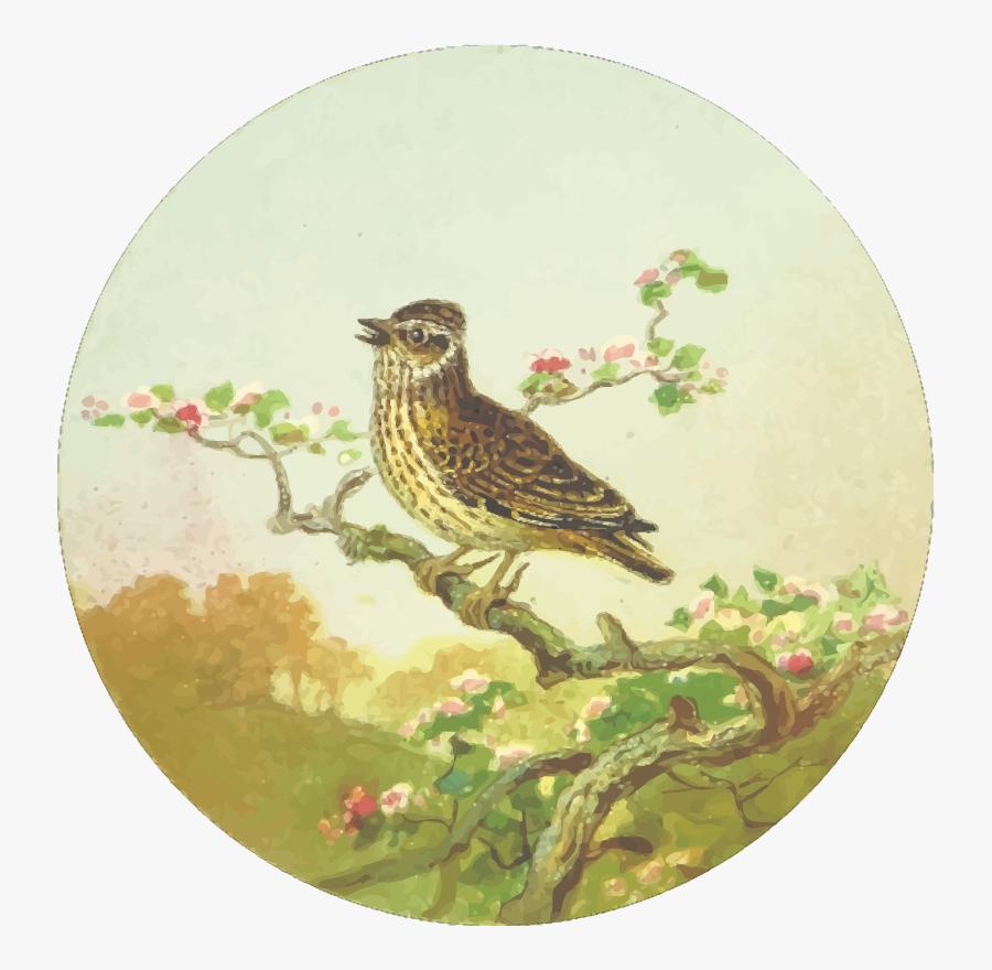 Beak,bird,branch - Drawing, Transparent Clipart