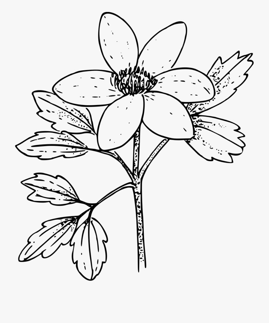Symmetry,monochrome Photography,petal - Colouring Pages Of Anemone Flower, Transparent Clipart
