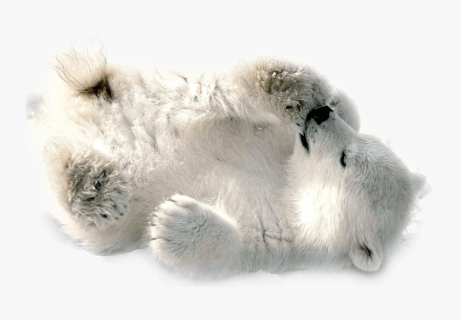 Polar Bear Baby Playing - Baby Polar Bear Transparent, Transparent Clipart