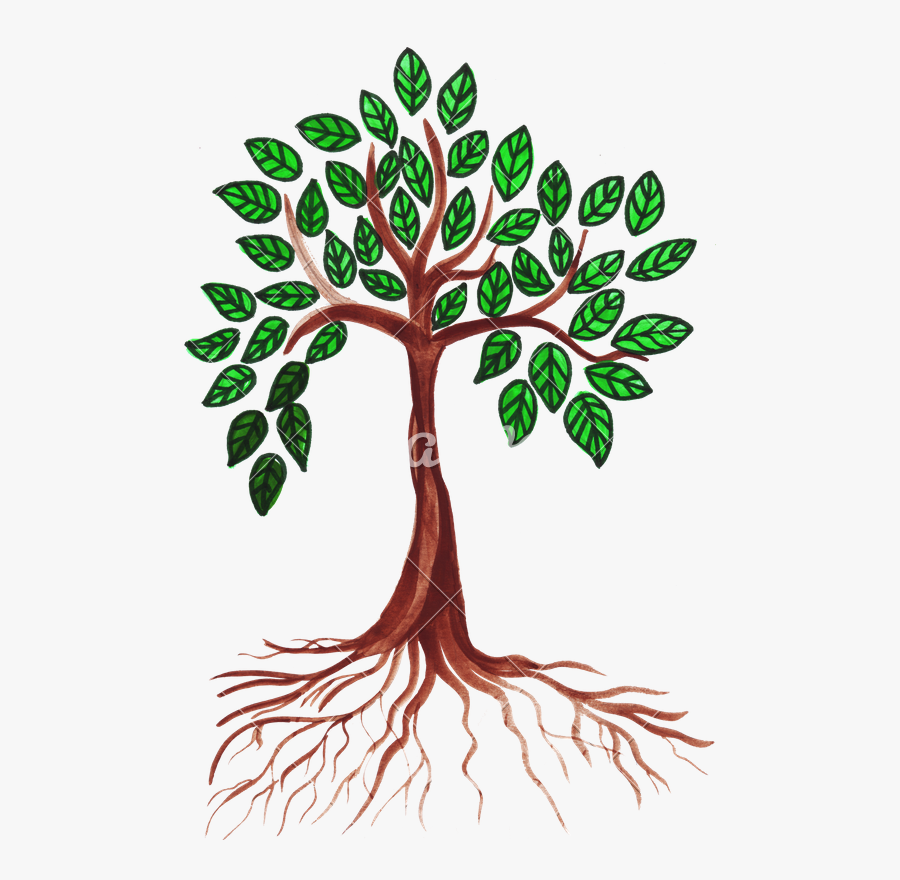 Green Drawing Tree - Drawing Tree With Leaves, Transparent Clipart