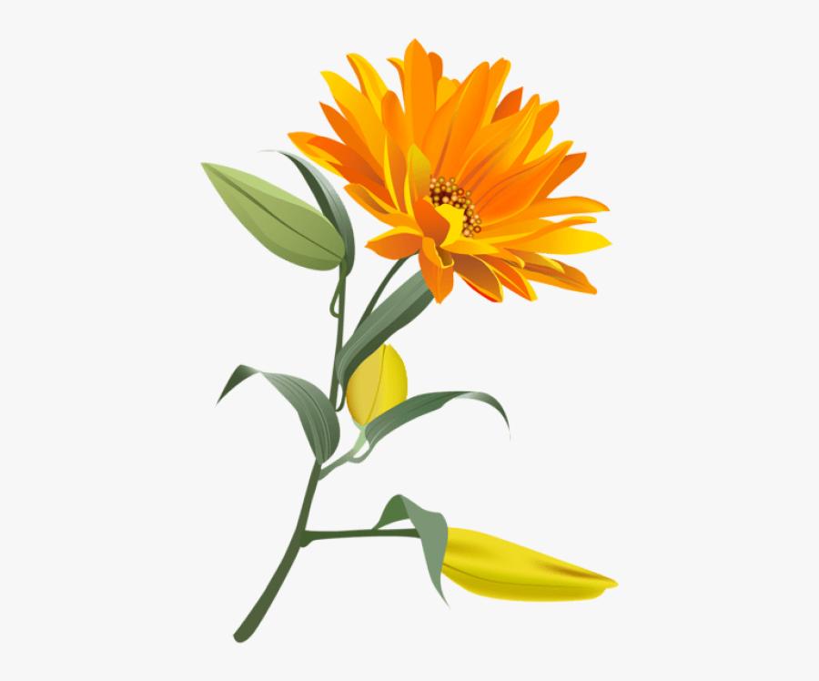 Free Png Download Orange Flower Png Images Background - Orange Flower Clipart, Transparent Clipart