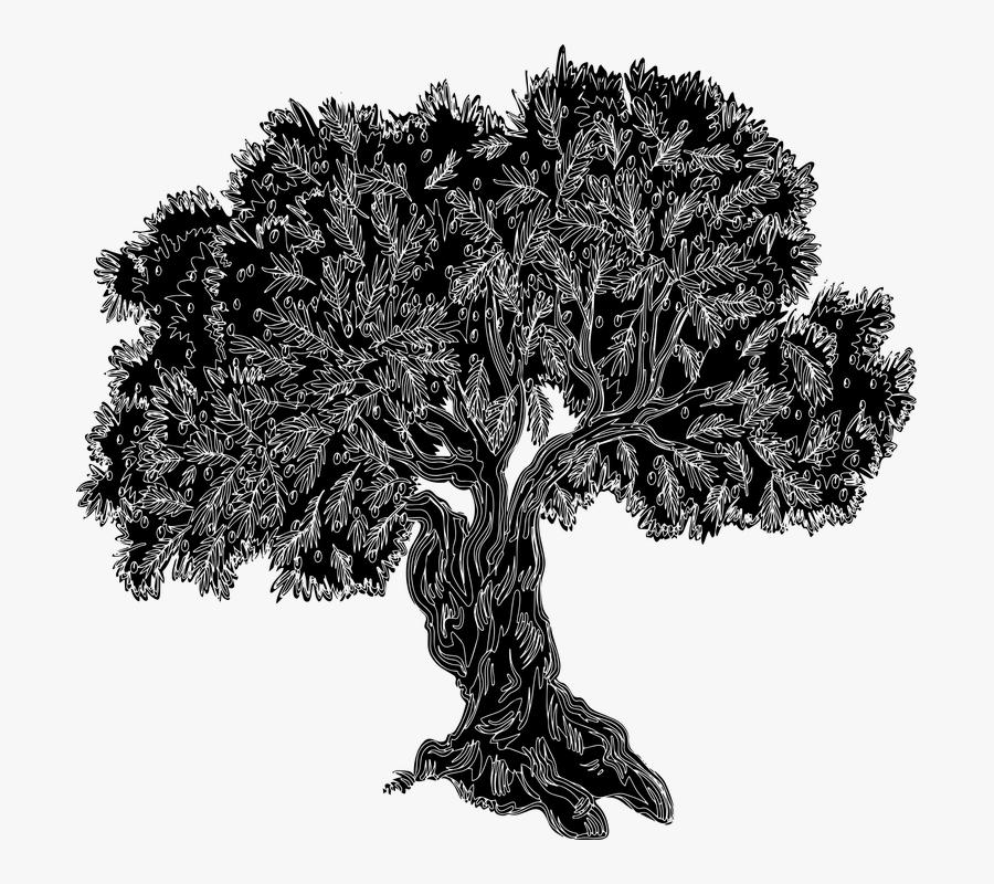 Olive Tree Old Tree Tree Silhouette Tree Gnarled - Olive Tree Silhouette, Transparent Clipart