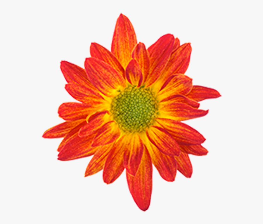 Drawing Orange Flower Color - Drawing Of A Flower Colour, Transparent Clipart