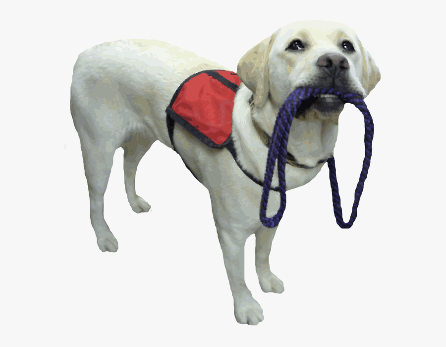 Website Upgrade - Service Dog Transparent Background, Transparent Clipart