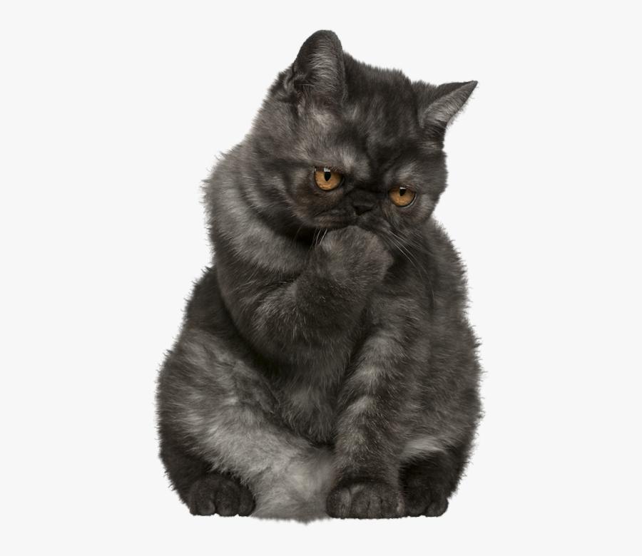 Cat Png Clipart Herding Cats, Cat Breeds, Funny Cats, - Funny Cats Png, Transparent Clipart