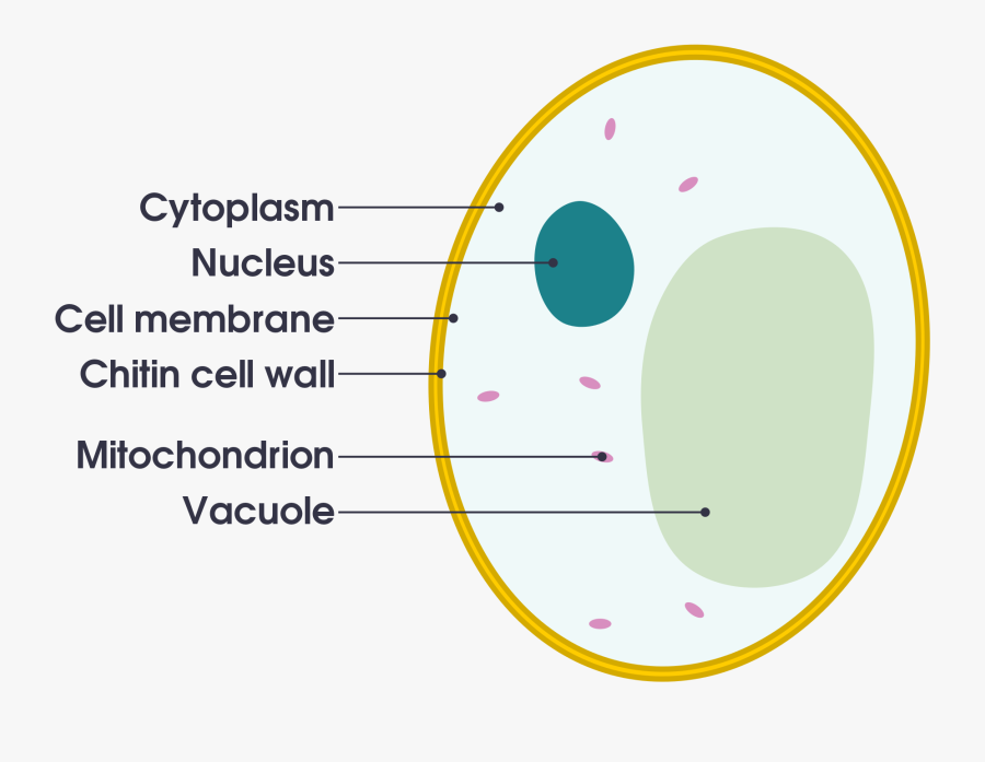 Bacteria Labeled Diagram Clipart Images Gallery For ...