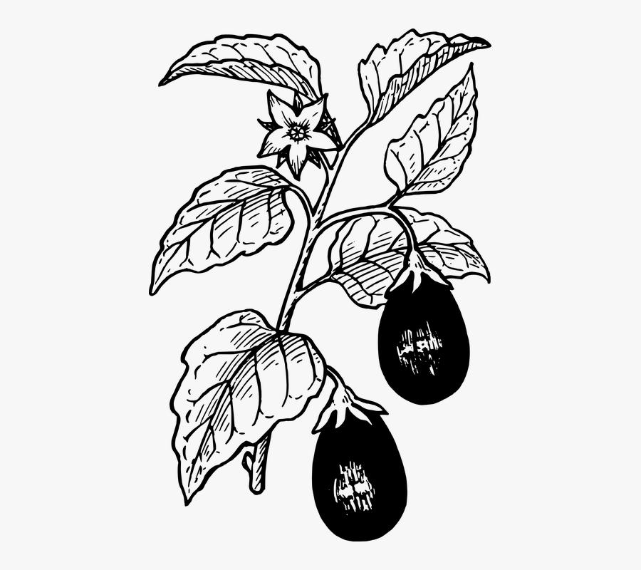 Eggplant Vegetables Plant Growing Food Fresh - Eggplant Clip Art, Transparent Clipart