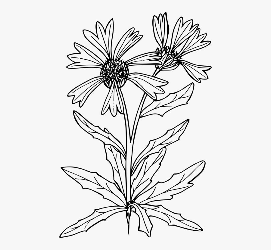 Symmetry,monochrome Photography,petal - Line Art, Transparent Clipart