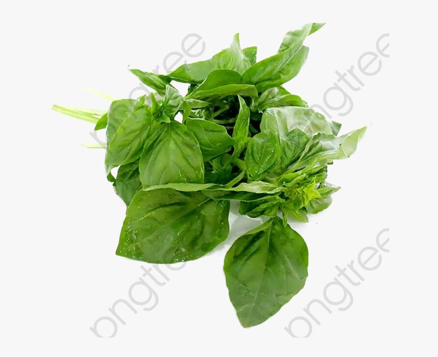 Transparent Herbs Clipart - Basil Leaves Png, Transparent Clipart