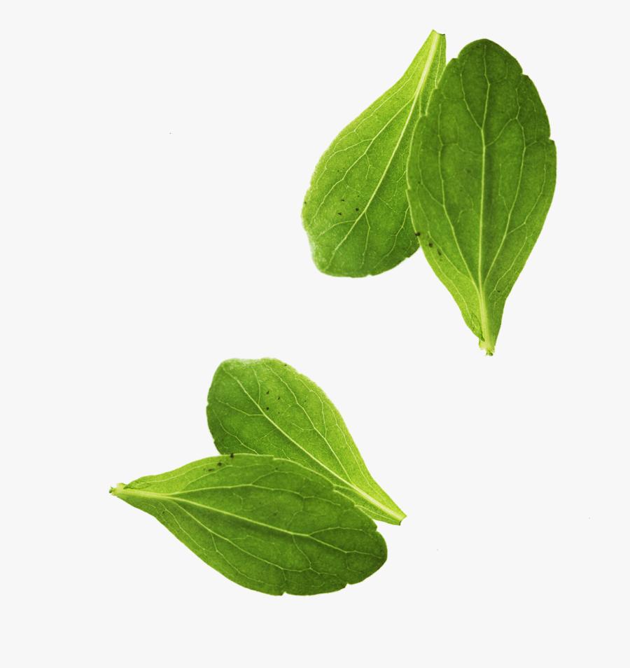 Leaf Vegetable Basil Leaf Vegetable, Transparent Clipart
