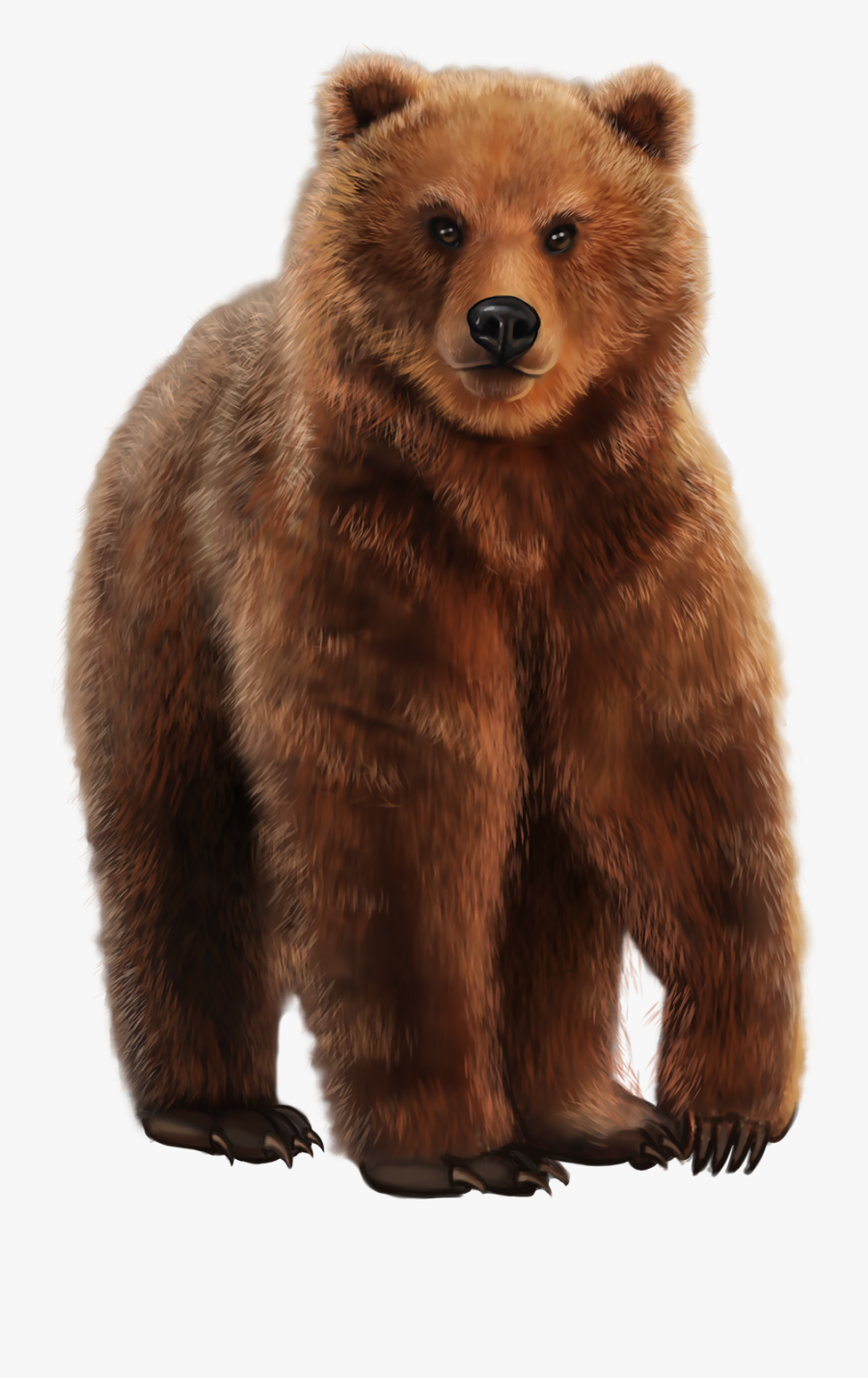 Grizzly Bear, Transparent Clipart