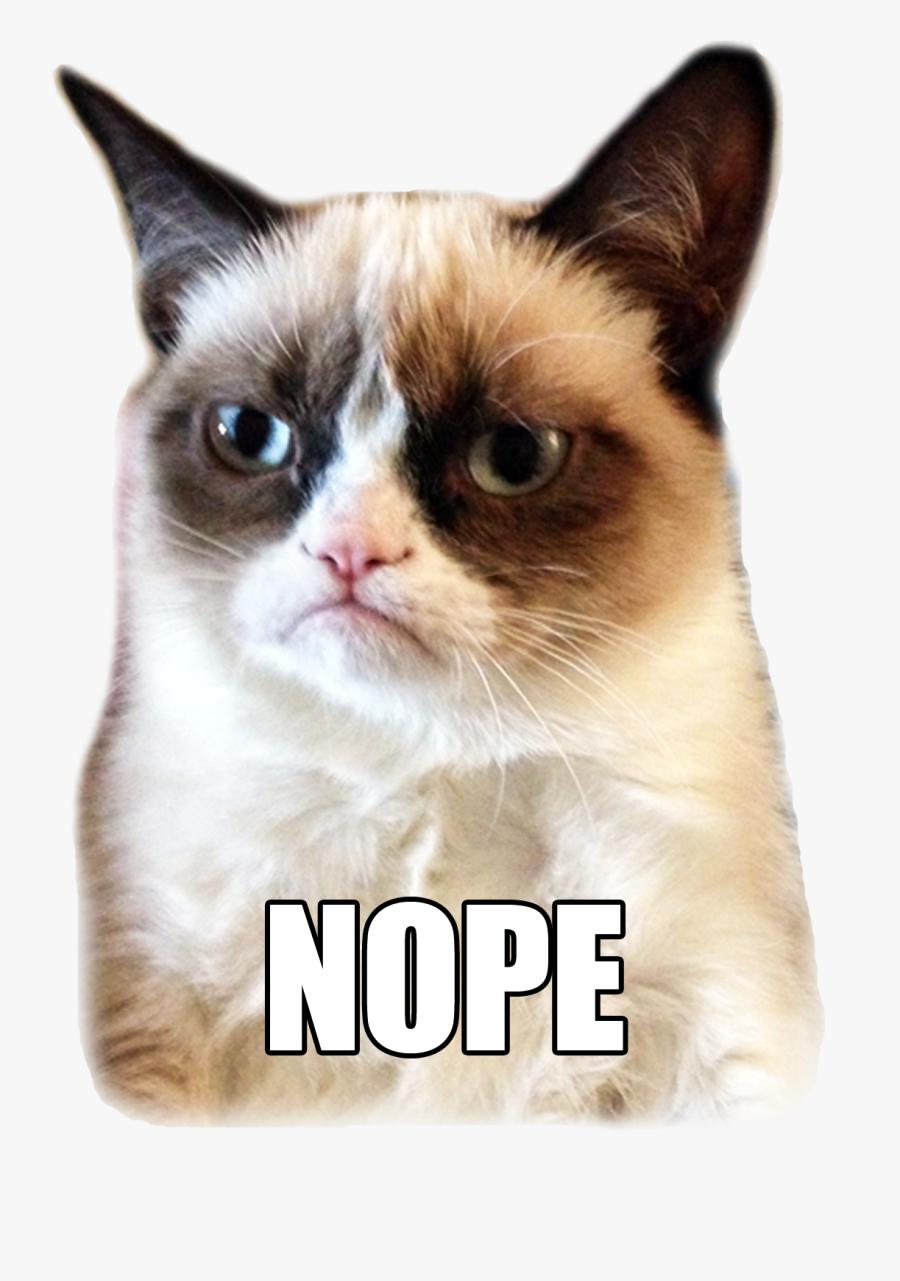 Grumpy Cat Meme, Transparent Clipart