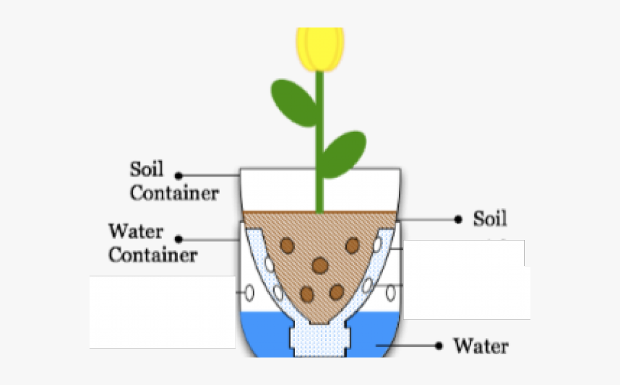 Seed Clipart Water Flower - Sub Irrigated Planter, Transparent Clipart