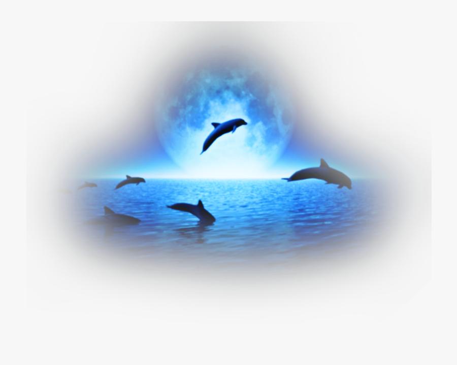 Transparent Sea Animals Png - Dolphins, Transparent Clipart