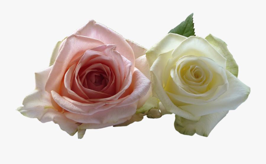 Wedding Rose Flower Png - Flores Rosas Con Blanco, Transparent Clipart