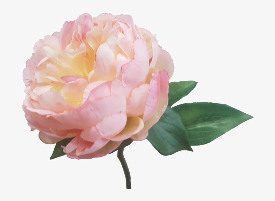 Cm Silk Wedding Bouquets Flowers Australia - Floribunda, Transparent Clipart