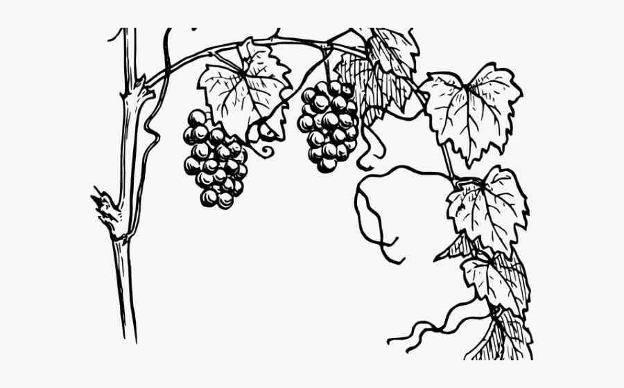 Transparent Jungle Vine Clipart Grapes Plant Drawing Easy Free Transparent Clipart Clipartkey
