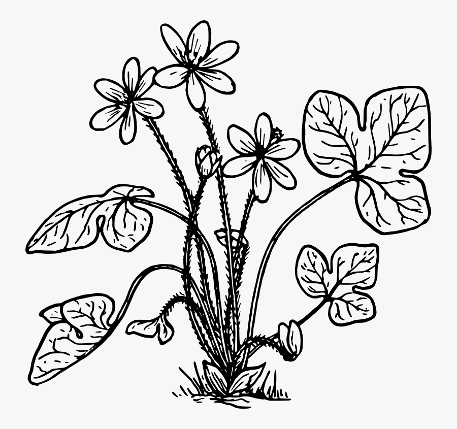 Herbs Plant Clipart Black And White, Transparent Clipart
