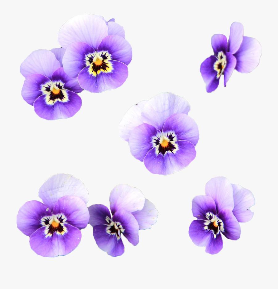 Transparent Wild Flowers Png Imagenes De Flores Color Free Transparent Clipart Clipartkey