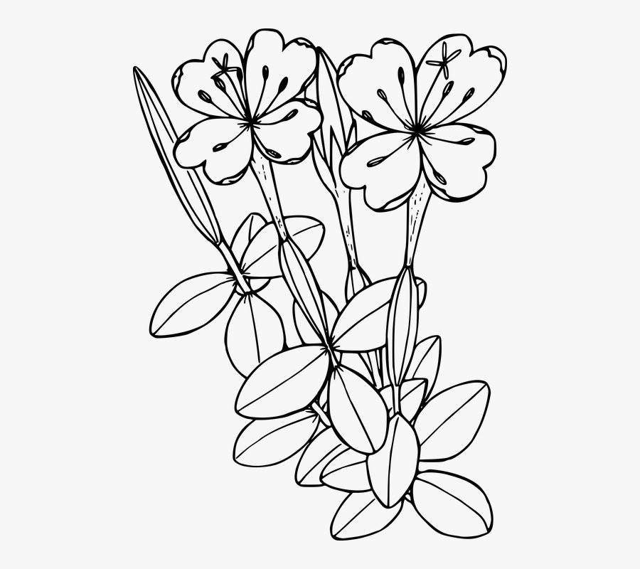 Flower, Plant, Wild, Wildflower - Floral Coloring Page Transparent, Transparent Clipart
