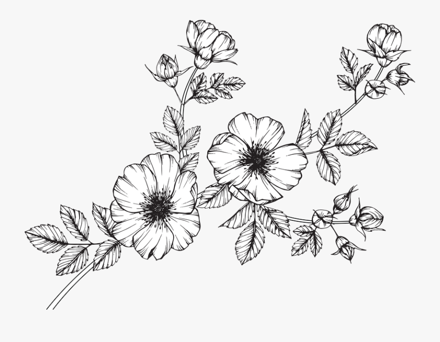 Clip Art Collection Of Free Wildflower - Black Flowers Drawing, Transparent Clipart