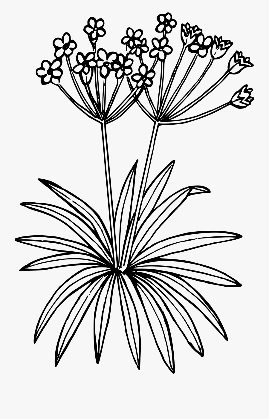 Arctic Flower Cliparts - Draw Tundra Plants, Transparent Clipart