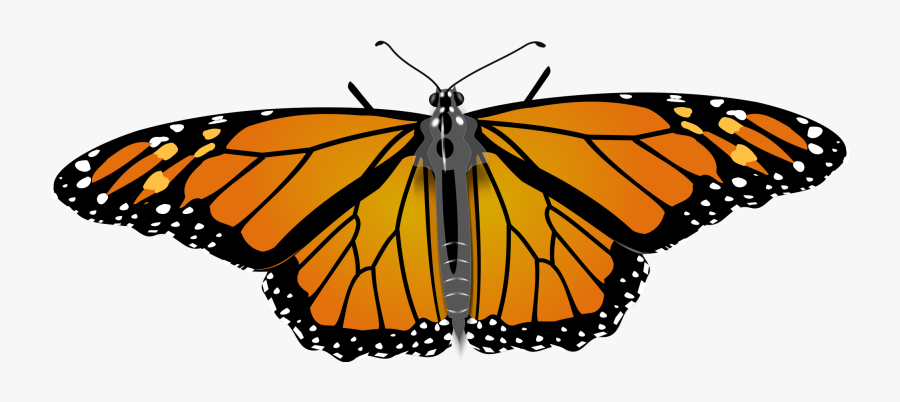 Transparent Monarch Clipart - Monarch Butterfly Drawing Tutorial, Transparent Clipart