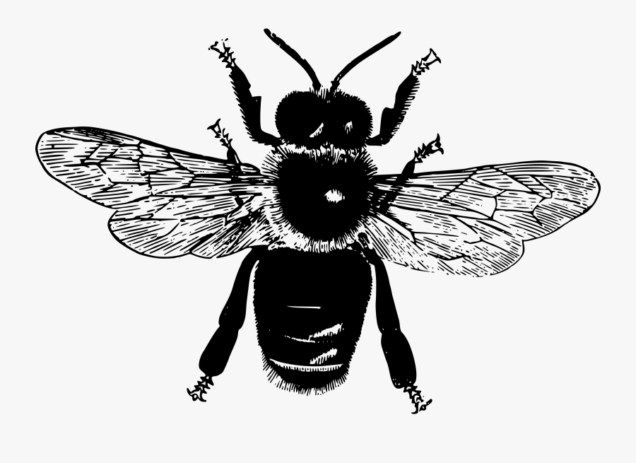 Flying Bee Big Image - Parts Of An Insect, Transparent Clipart