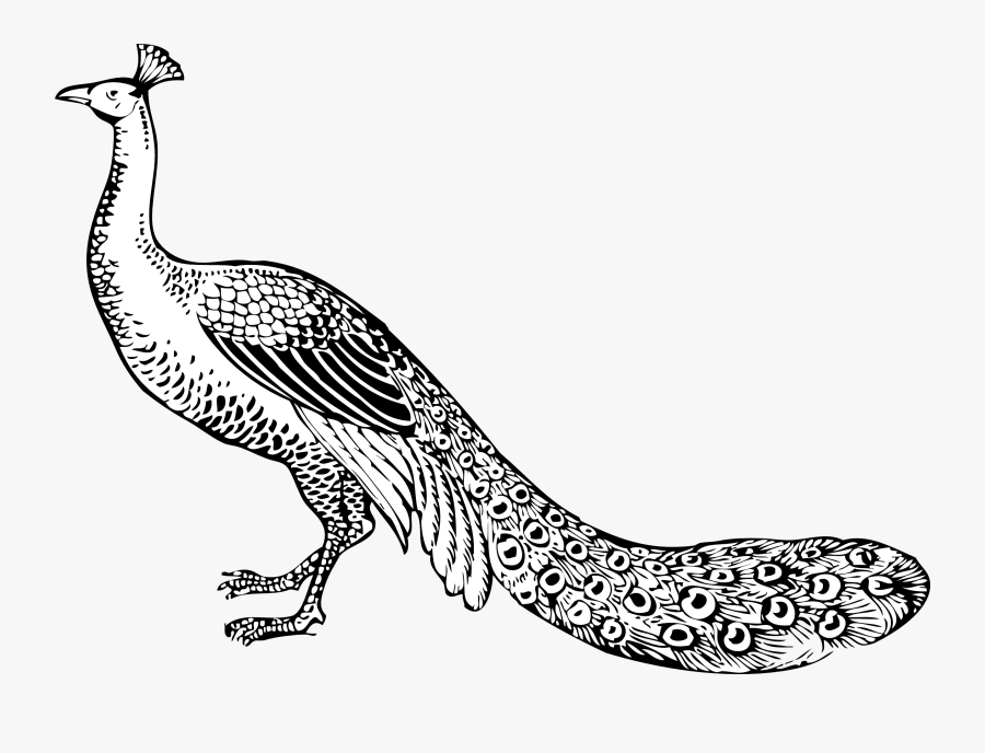 Thumb Image - Peacock Clip Art Black And White, Transparent Clipart