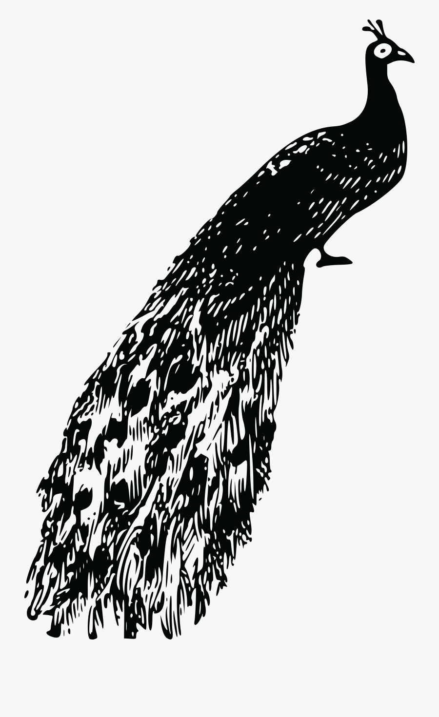 Free Clipart Of A Peacock - Peacock Clipart Black And White Png, Transparent Clipart