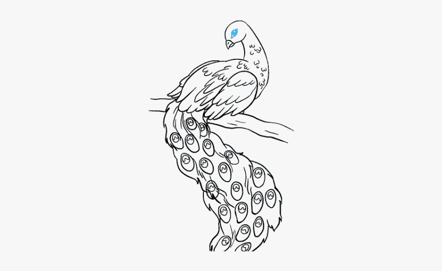 Peacock Bird Drawings Easy Free Transparent Clipart Clipartkey