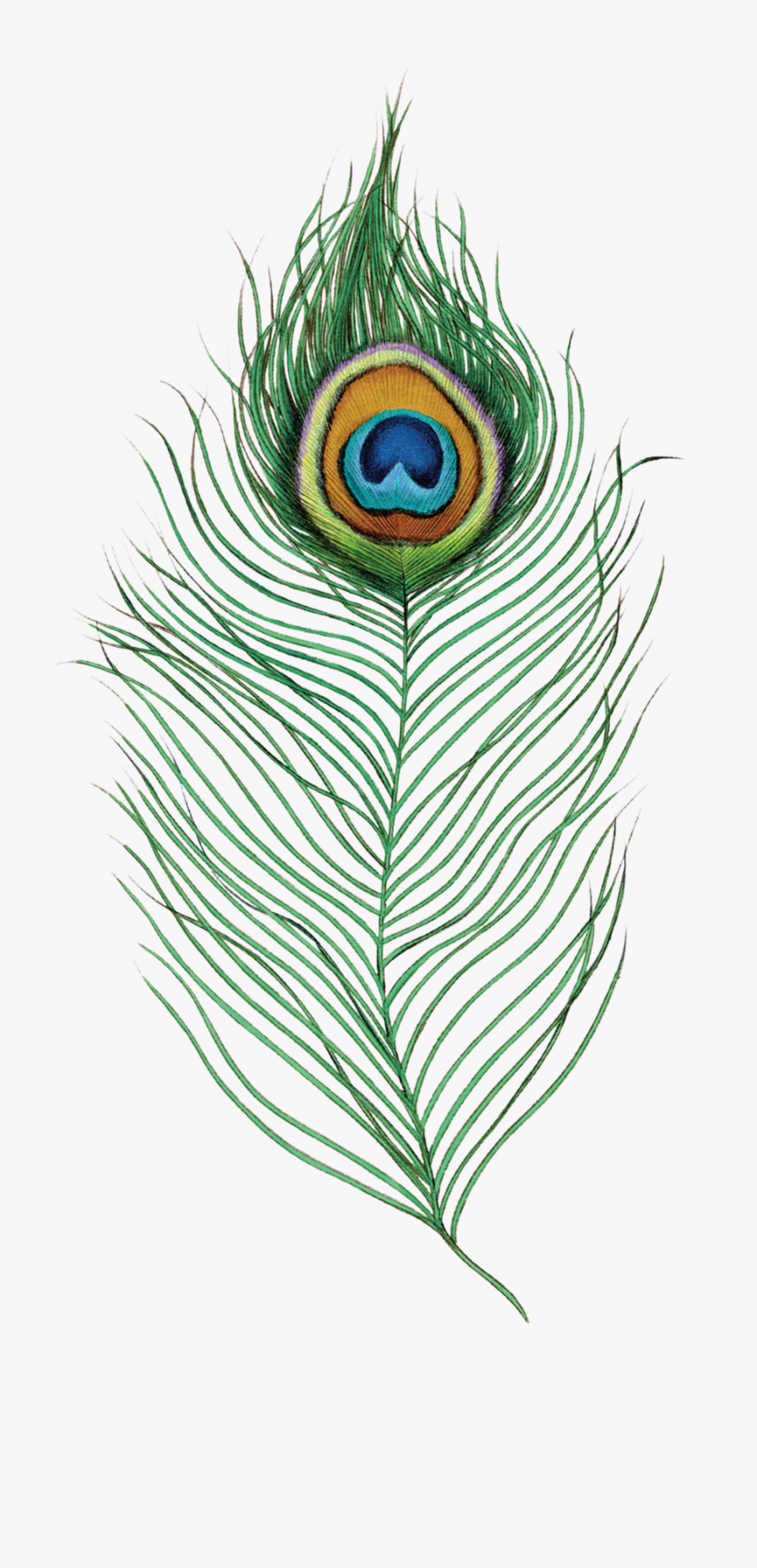 Peacock Feather - Peacock Feather Png Transparent, Transparent Clipart